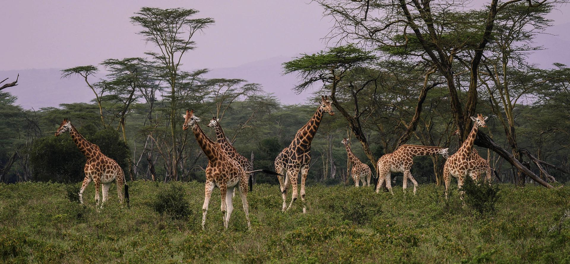 Tanzania Safari Explore