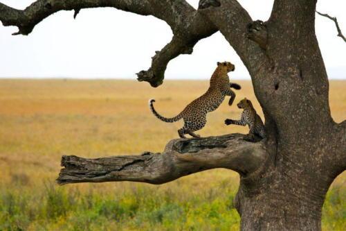 Serengeti-Wildlife-Safarii