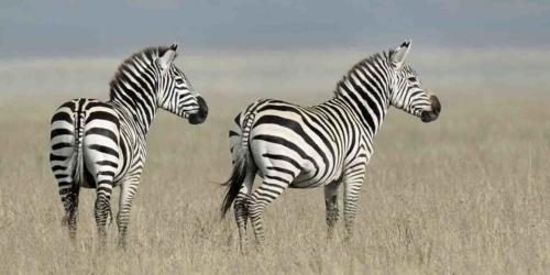 Tarangire, Ngorongoro, Serengeti & Zanzibar