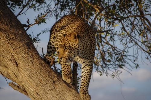 Uganda Wildlife Safaris2